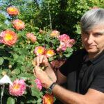 Hvorfor og hvordan bliver man rosenforædler?