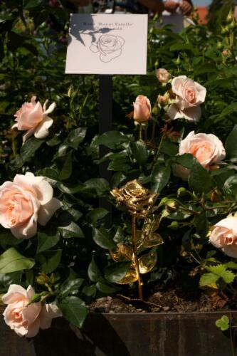 Royal Estelle plantet i Kalmar
